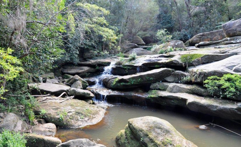 Experience the 'Galuwa Inyun Bulga' Trail at Flat Rock Gully Reserve in Willoughby